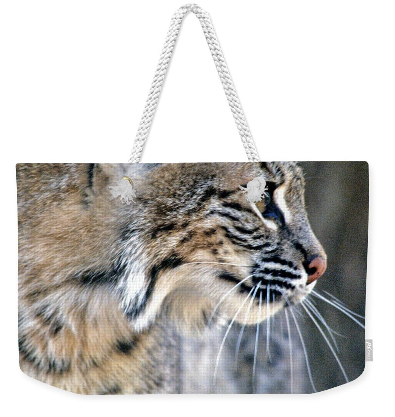 Bobcat Weekender Tote Bag featuring the photograph Florida Bobcat by Larry Allan