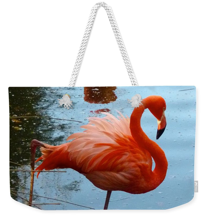 Flamingo Weekender Tote Bag featuring the photograph Florida Flamingo by Richard Bryce and Family