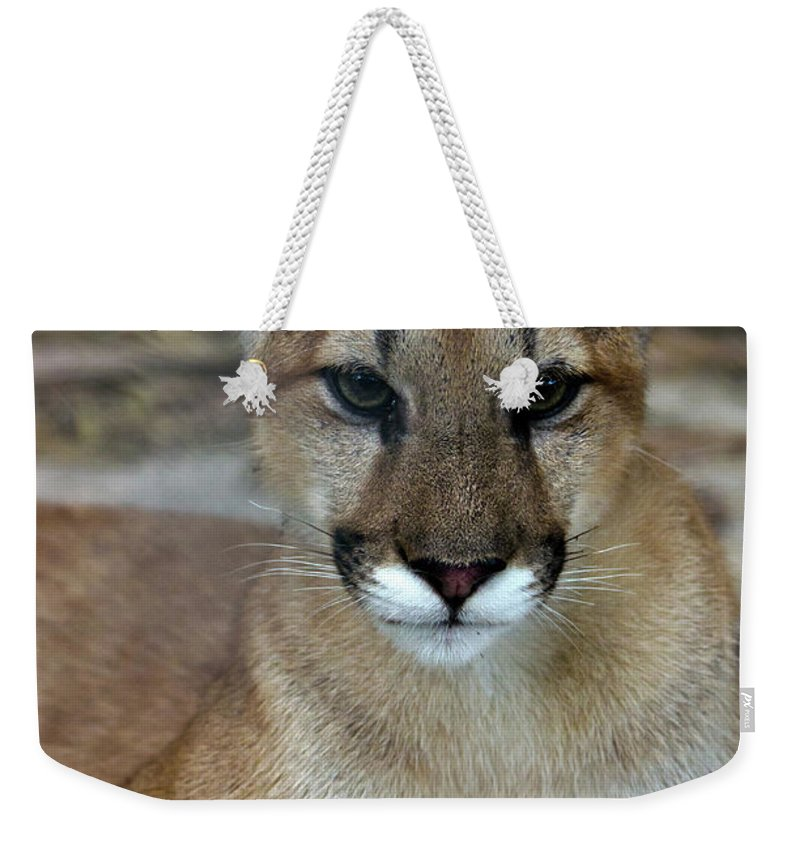 Animal Themes Weekender Tote Bag featuring the photograph Florida Panther, Endangered by Mark Newman