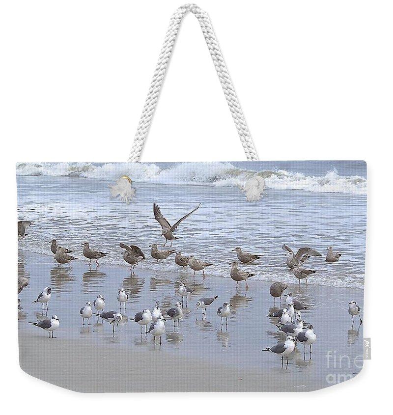 Gulls Weekender Tote Bag featuring the photograph Florida Seabirds by Carol Bradley
