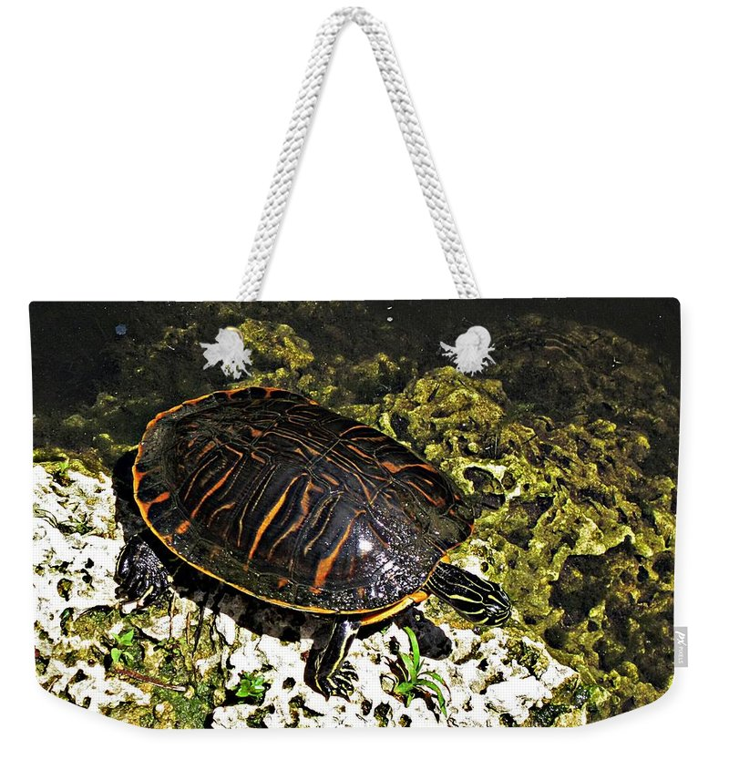 Turtle Weekender Tote Bag featuring the photograph Florida Turtle by MTBobbins Photography