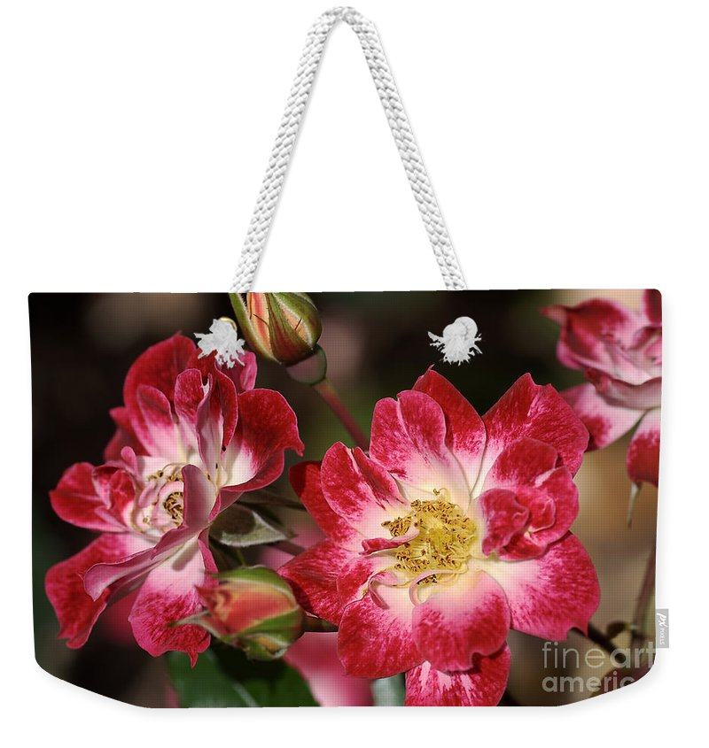 Flower Weekender Tote Bag featuring the photograph Flower-cream-pink-red-rose by Joy Watson