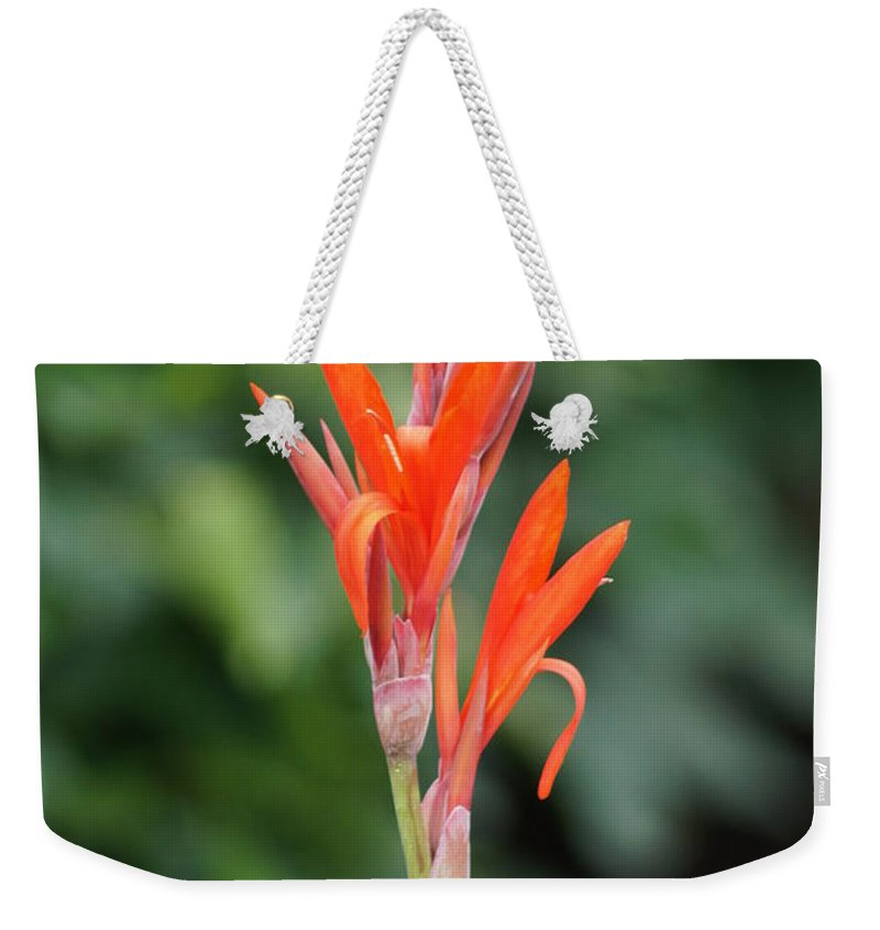 Beautiful Flower Weekender Tote Bag featuring the photograph Flower by Jeffery L Bowers