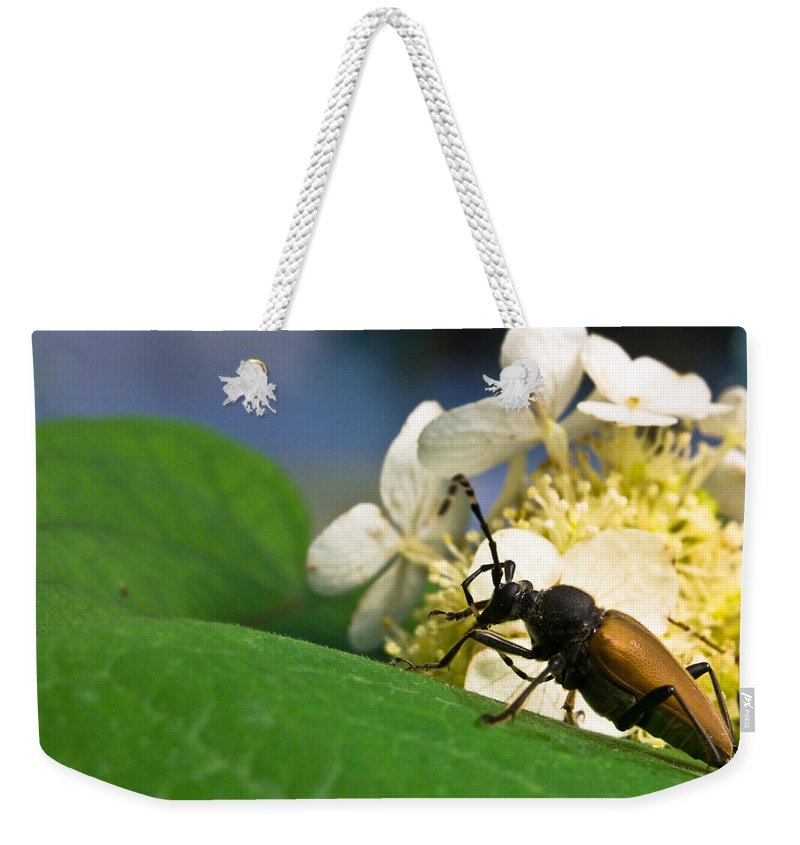 Beetle Weekender Tote Bag featuring the photograph Flower Rise Over Beetle by Douglas Barnett