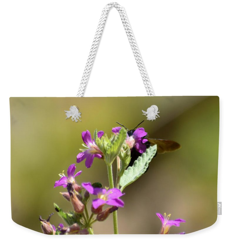 Lady Bird Johnson Wildflower Center Weekender Tote Bag featuring the photograph Flower With Bee by Allen Sheffield