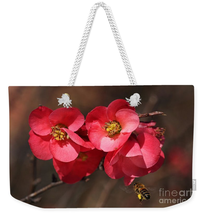 Bubbleblue Weekender Tote Bag featuring the photograph Flowering Quince With Bee by Joy Watson