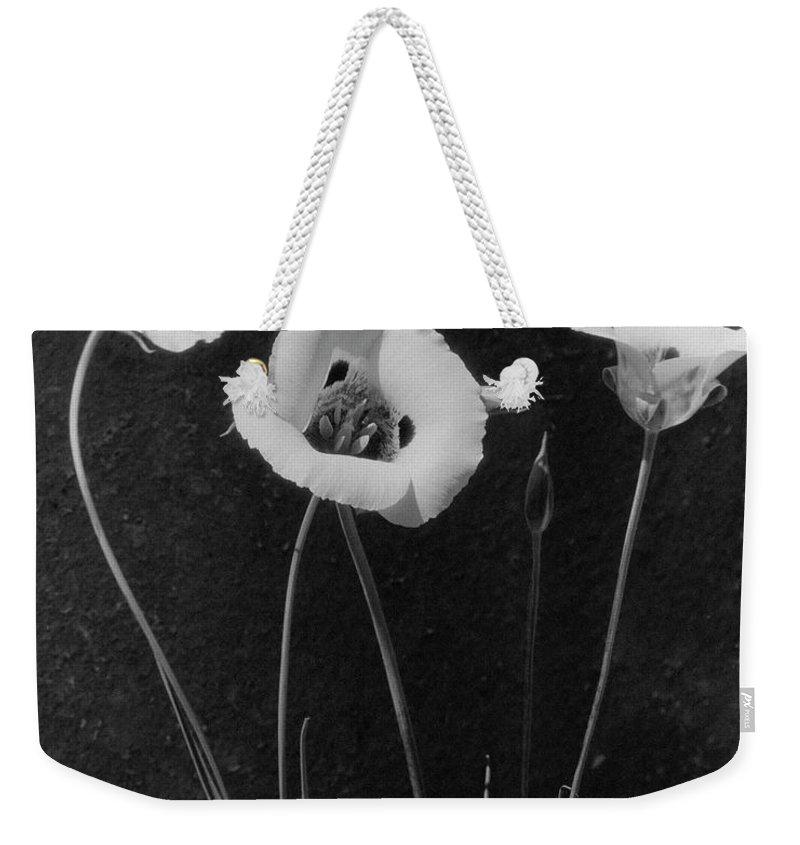 Exterior Weekender Tote Bag featuring the photograph Flowers In Louise Beebe Wilder's Garden by Harry G. Healy