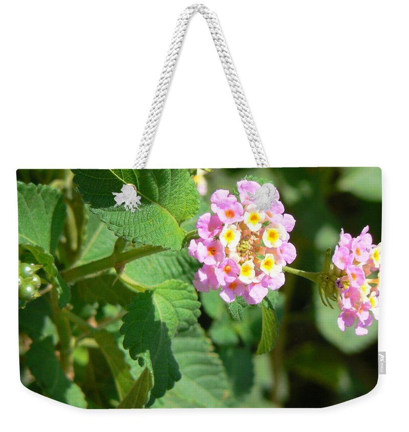 Israel Weekender Tote Bag featuring the photograph Flowers Of Pink And Orange by Katerina Naumenko