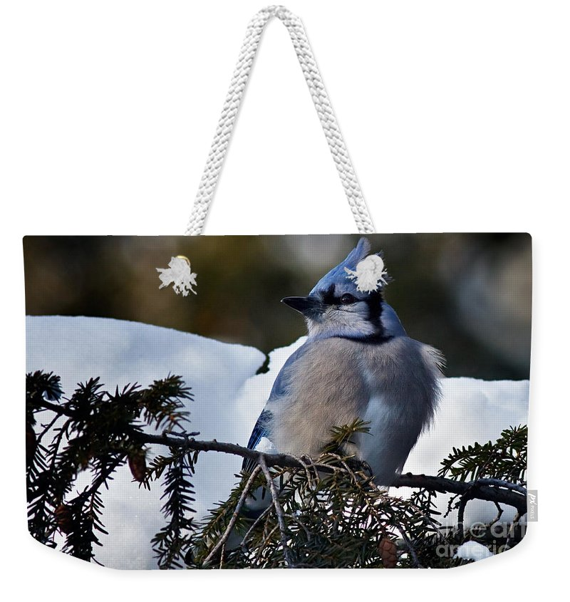 Blue Jay Weekender Tote Bag featuring the photograph Fluffy Blue Jay by Rick Mousseau