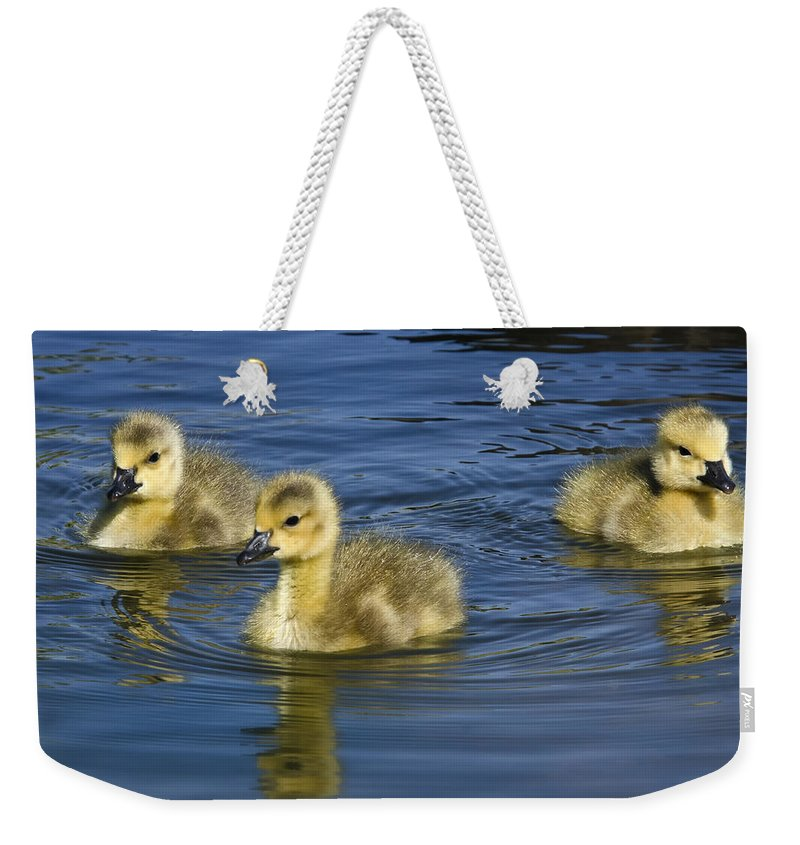 Baby Canada Geese Weekender Tote Bag featuring the photograph Fluffy Floaters by Saija Lehtonen