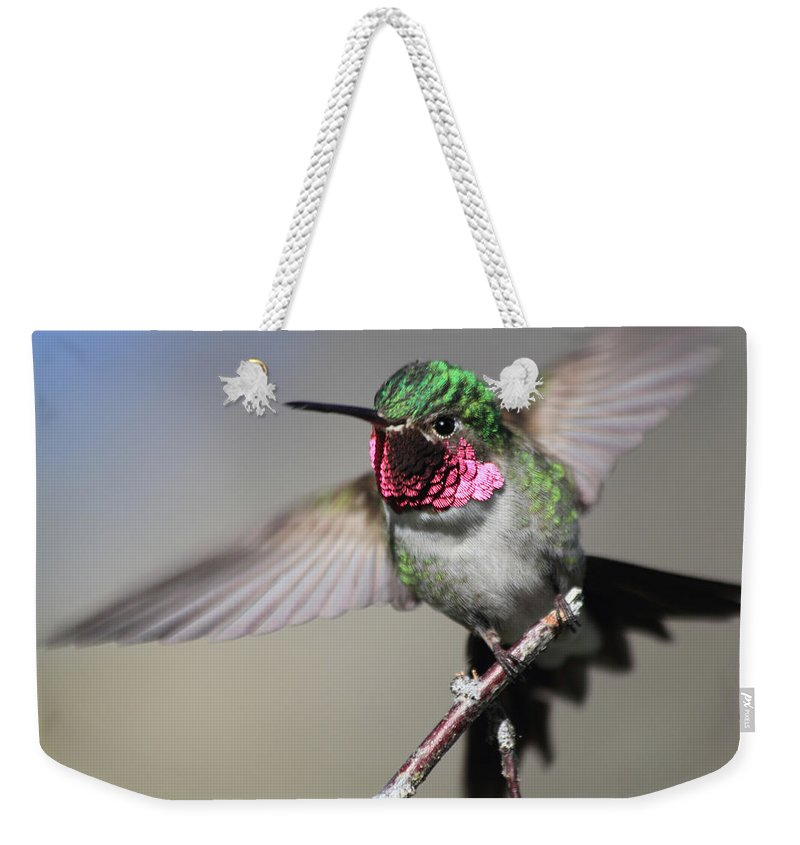 Ruby Throated Hummingbird Weekender Tote Bag featuring the photograph Fluttering by Shane Bechler