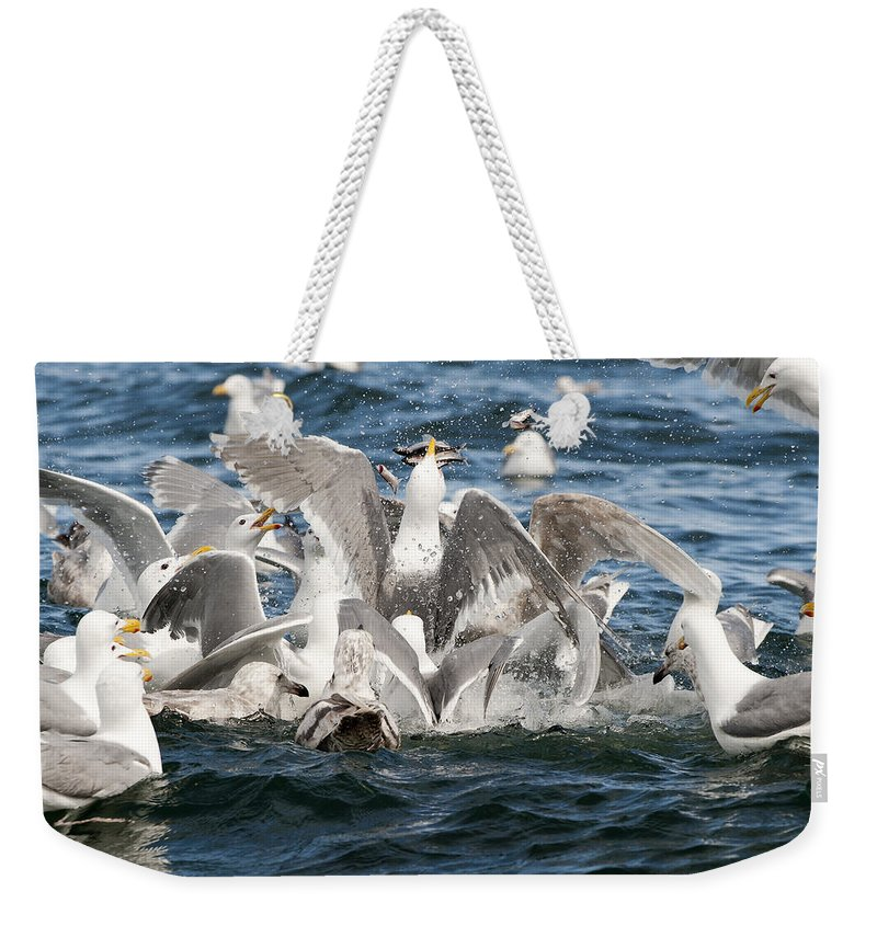 Gull Weekender Tote Bag featuring the photograph Flying Fish by Ted Raynor
