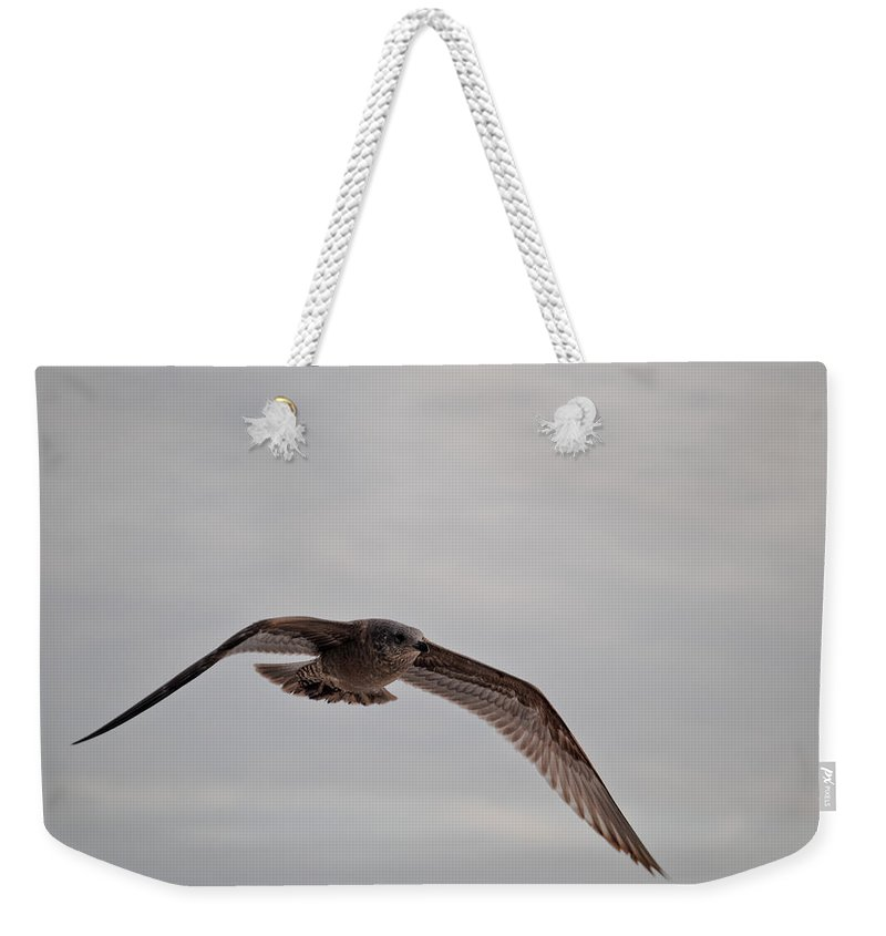 Seagull Weekender Tote Bag featuring the photograph Flying High by Jon Cody