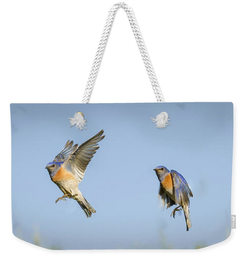 Birds Weekender Tote Bag featuring the photograph Flying by Jean Noren