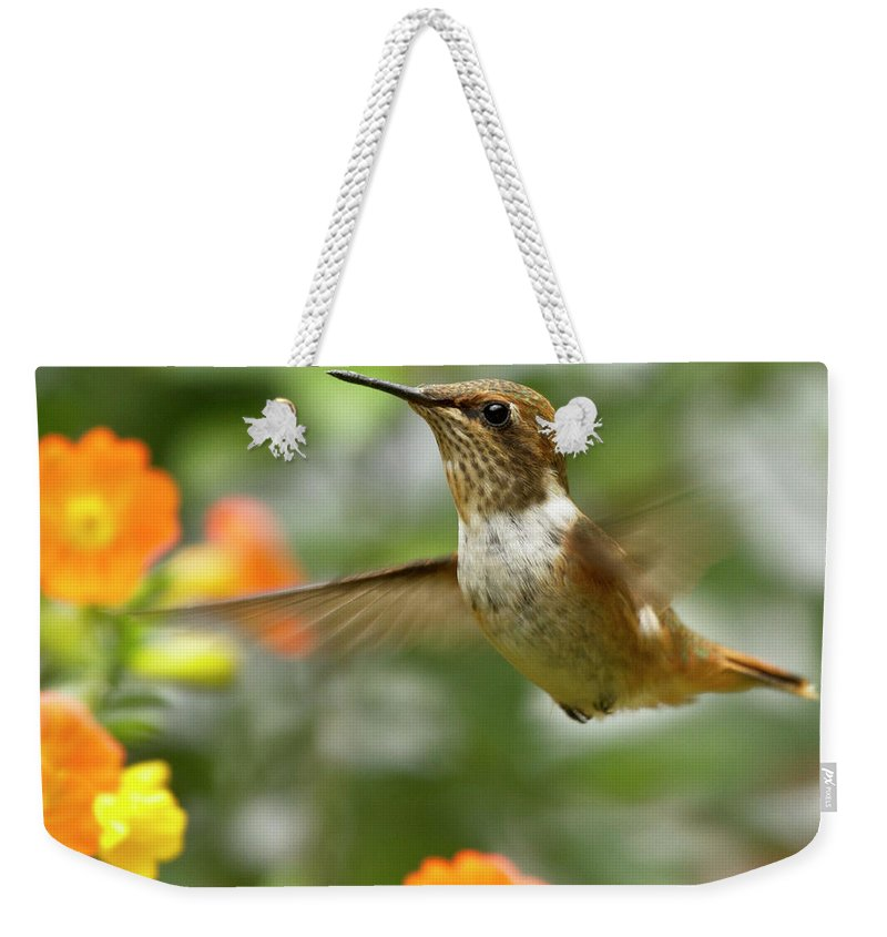 Bird Weekender Tote Bag featuring the photograph Flying Scintillant Hummingbird by Heiko Koehrer-Wagner