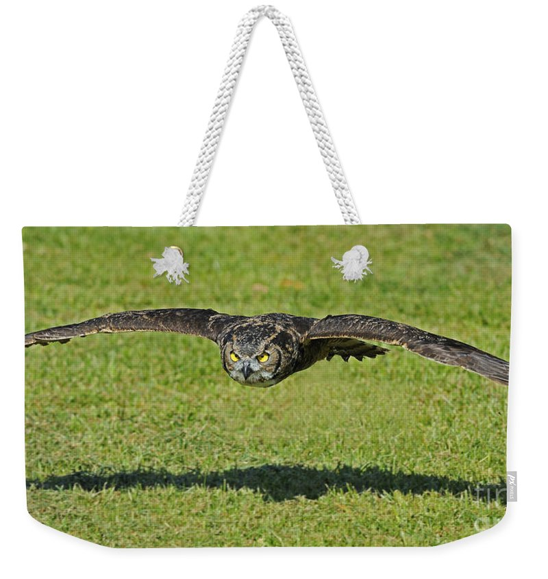 Parc Omega Weekender Tote Bag featuring the photograph Flying Tiger... by Nina Stavlund