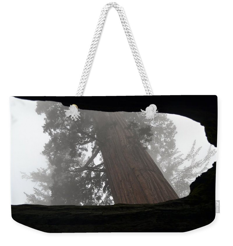 Sequoia Weekender Tote Bag featuring the photograph Foggy Morning Sequoias by Christine Owens