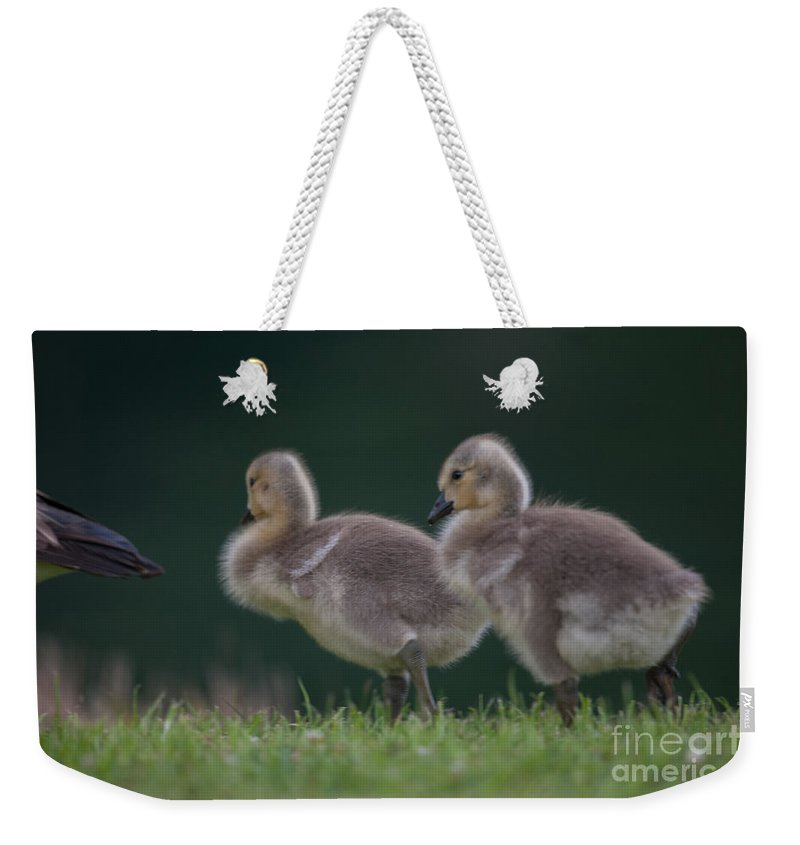 Gosling Weekender Tote Bag featuring the photograph Follow Daddy by Dale Powell