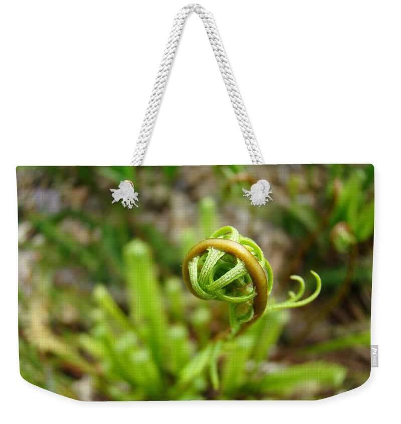 Fern Weekender Tote Bag featuring the photograph Forest Fern Frond Unfolding Ferns Art by Patti Baslee