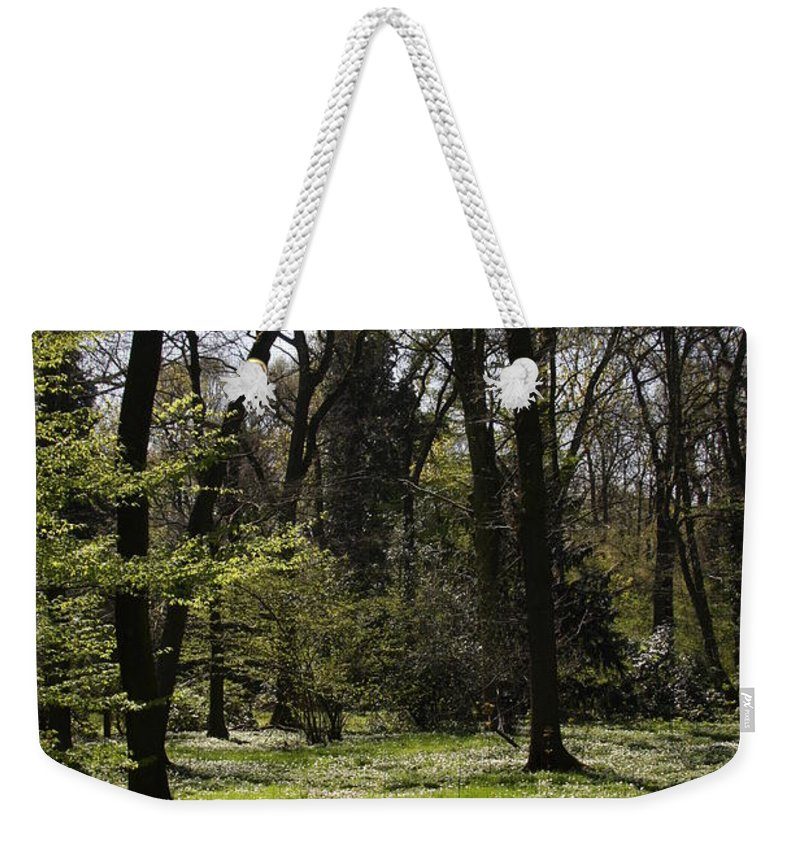 Trees Weekender Tote Bag featuring the photograph Forest In Spring by Christiane Schulze Art And Photography