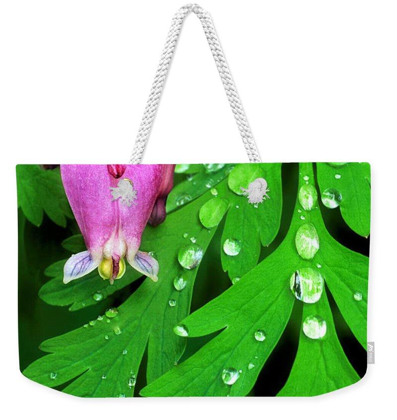 Formosa Bleeding Heart Weekender Tote Bag featuring the photograph Formosa Bleeding Heart On Ferns by Dave Welling