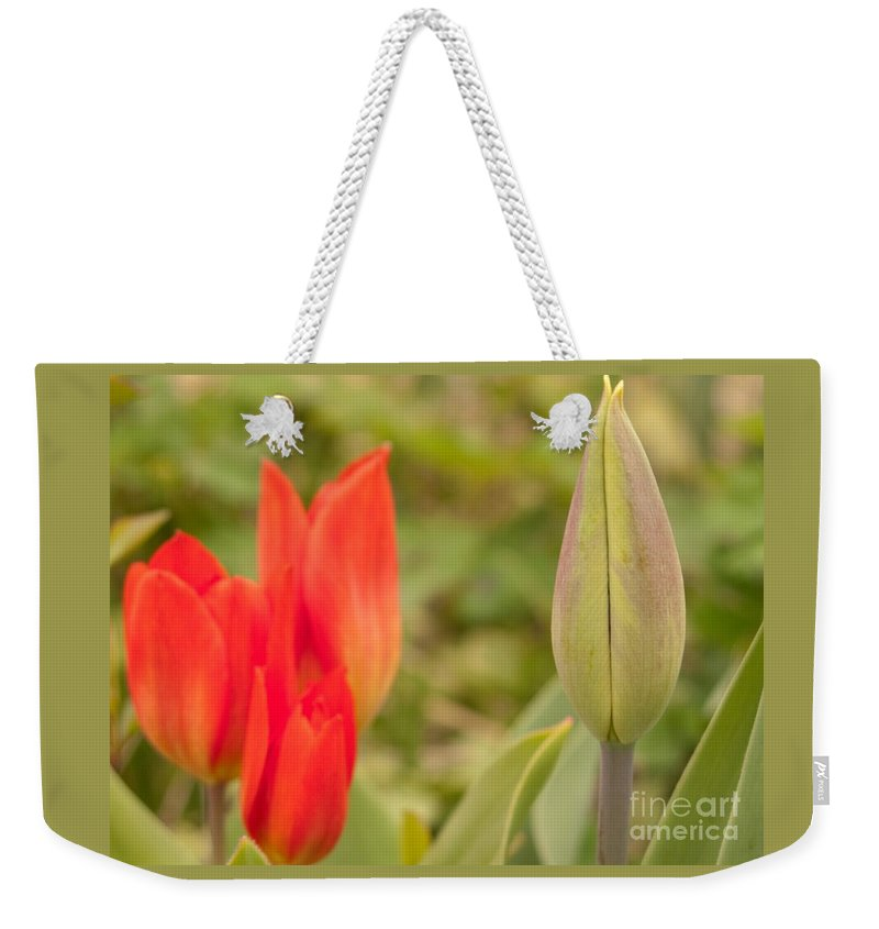 Tulip Weekender Tote Bag featuring the photograph Forthcoming by Ann Horn