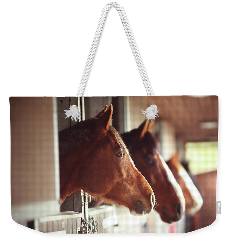 Horse Weekender Tote Bag featuring the photograph Four Horses In Stables by Olivia Bell Photography