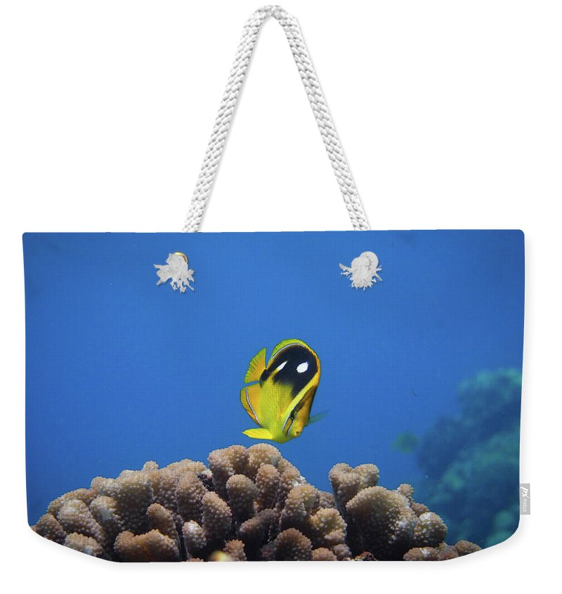 Underwater Weekender Tote Bag featuring the photograph Four Spot Butterfly by Taiki Sakai