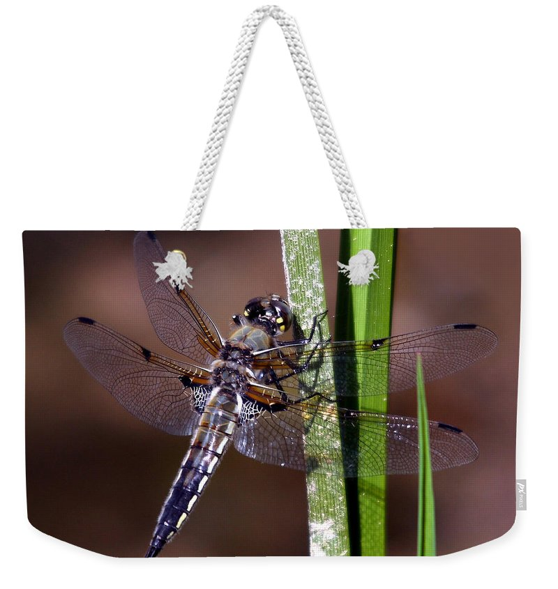 Four-spotted Skimmer Weekender Tote Bag featuring the photograph Four-spotted Skimmer by David Salter
