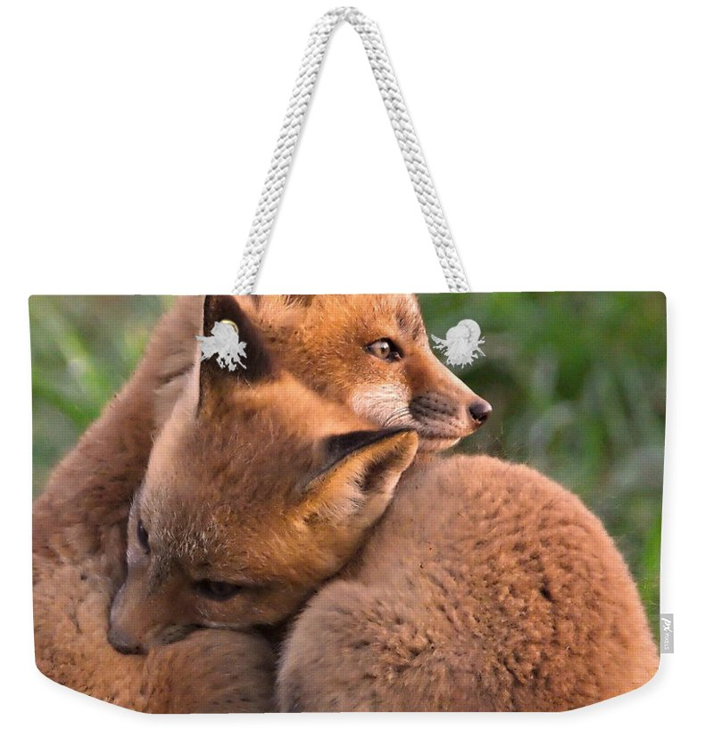 Fox Weekender Tote Bag featuring the photograph Fox Cubs Cuddle by William Jobes
