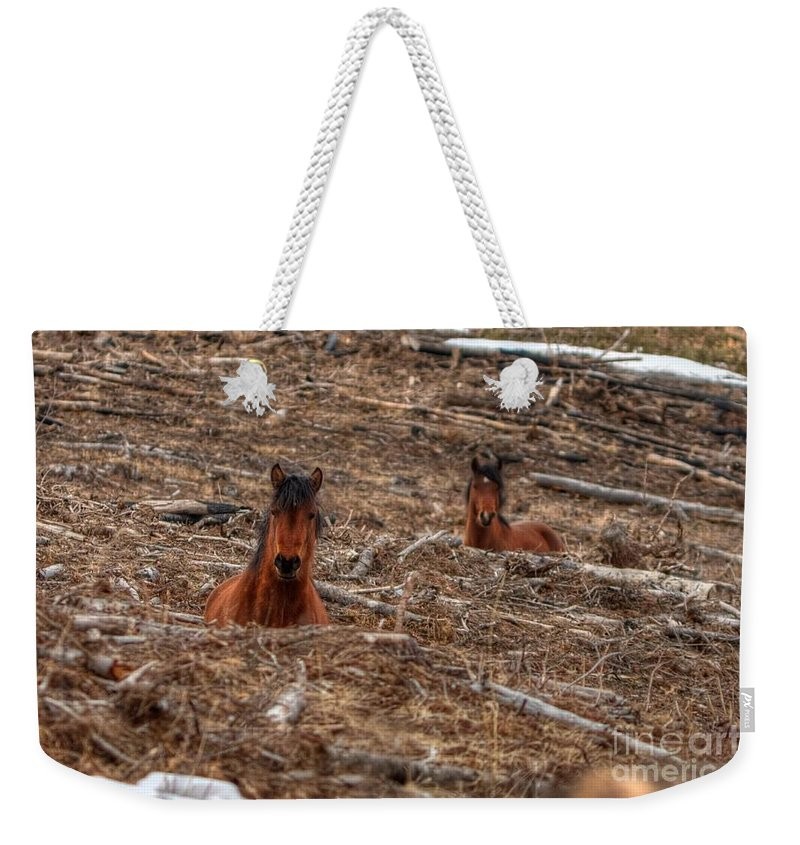 Wild Horse Weekender Tote Bag featuring the photograph Foxhole Mustangs by James Anderson