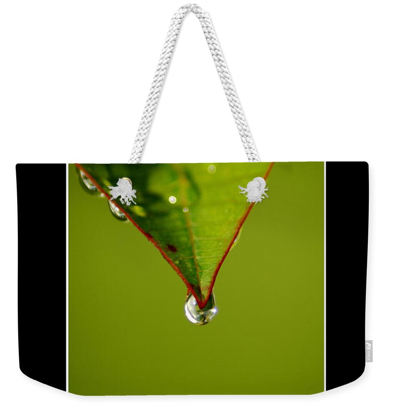 Leaf Weekender Tote Bag featuring the photograph Frangipani by David Weeks