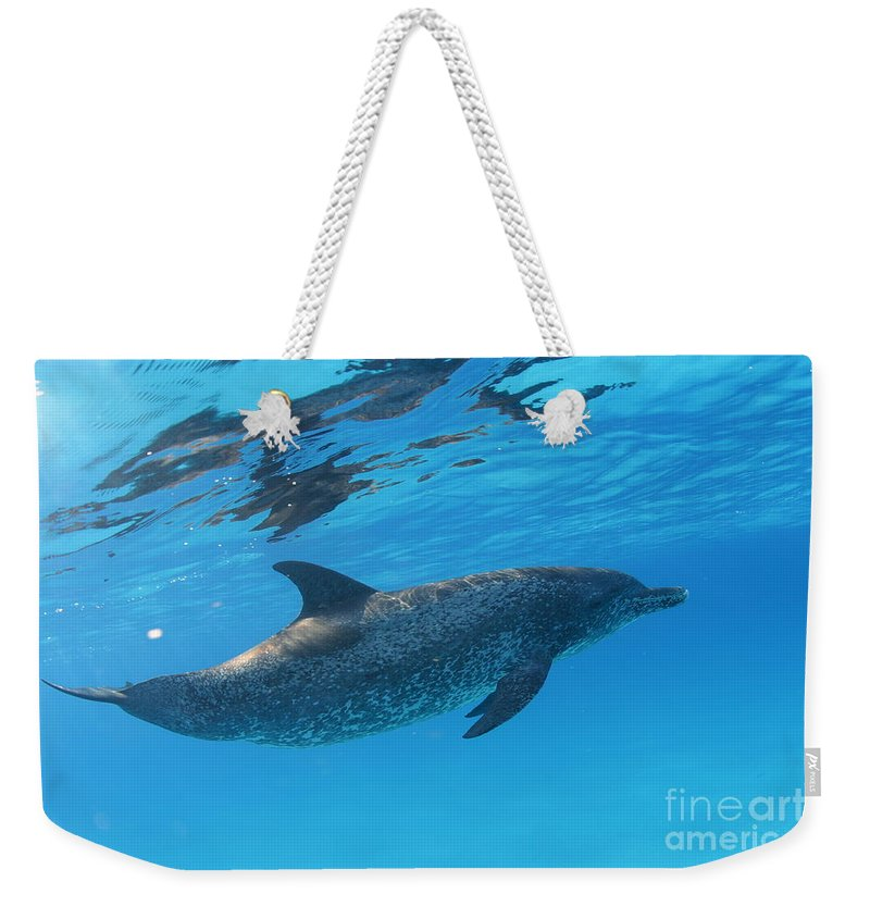 Dolphin Weekender Tote Bag featuring the photograph Free by Carey Chen