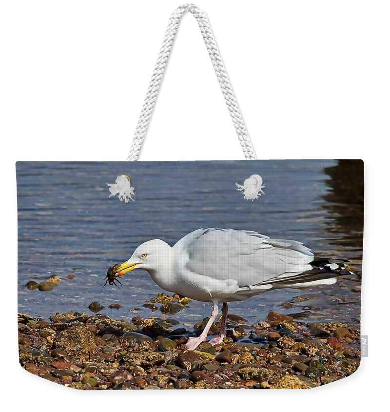 Crab Weekender Tote Bag featuring the photograph Fresh Crab For Lunch by Susie Peek