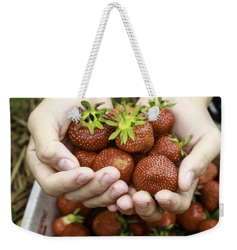 Fresh Weekender Tote Bag featuring the photograph Fresh Picked Strawberries by Edward Fielding