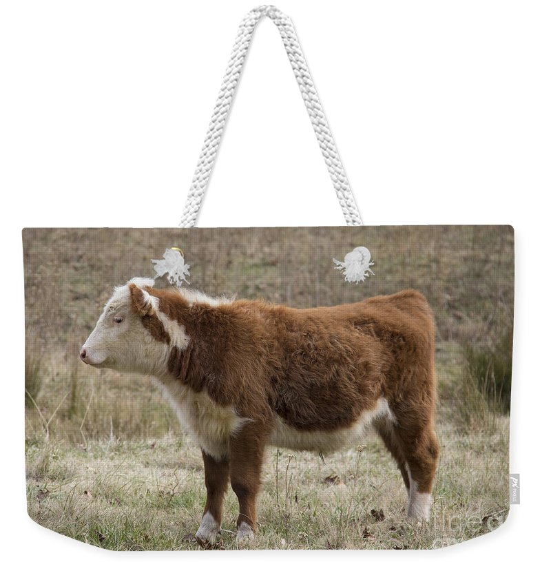 Cow Weekender Tote Bag featuring the photograph Frick In Profile by Teresa Mucha