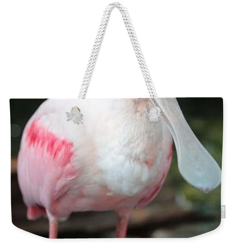 Roseate Spoonbill Weekender Tote Bag featuring the photograph Friendly Spoonbill by Carol Groenen