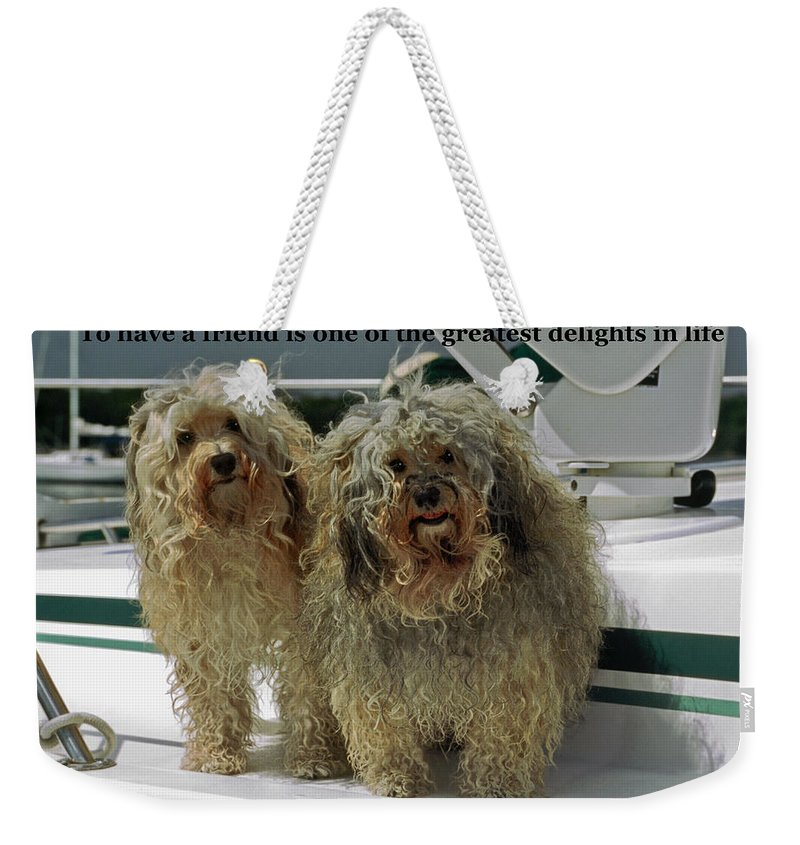 2 Havanese Dogs Weekender Tote Bag featuring the photograph Friends by Sally Weigand