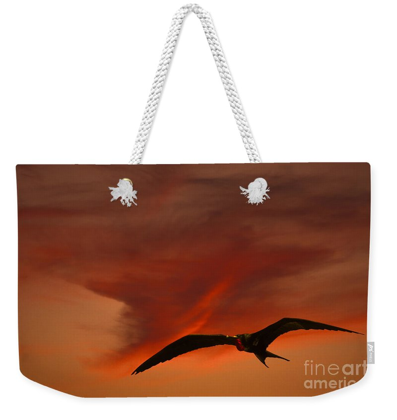 Animal Weekender Tote Bag featuring the photograph Frigate Bird by Ron Sanford