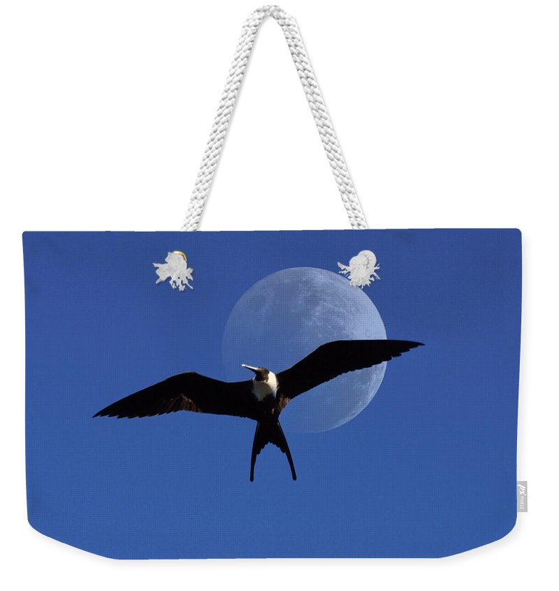 Frigate Weekender Tote Bag featuring the photograph Frigatebird Moon by Jerry McElroy