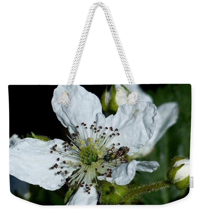 Outdoors Weekender Tote Bag featuring the photograph Blackberry by Charles Ford
