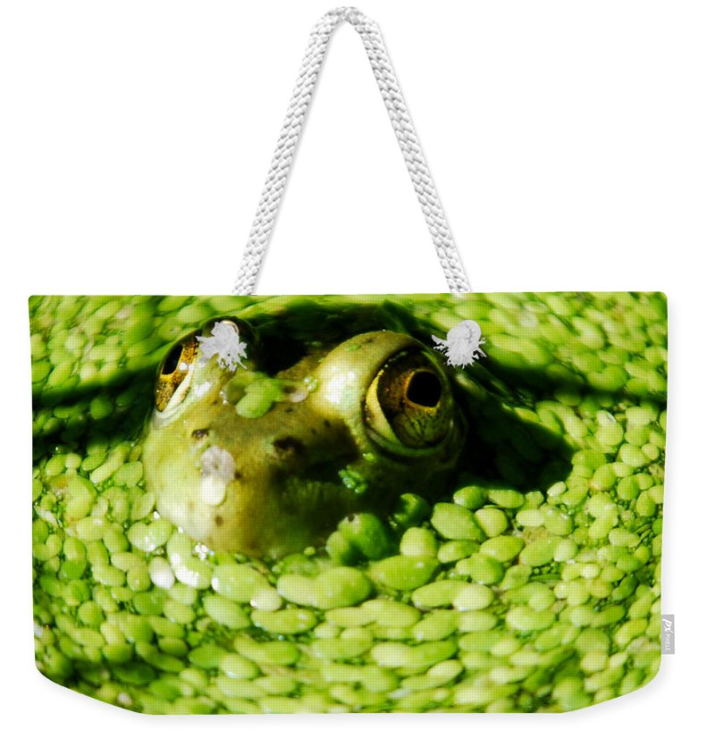 Green Algae Weekender Tote Bag featuring the photograph Frog Eye's by Optical Playground By MP Ray