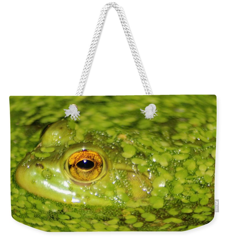 Green Algae Weekender Tote Bag featuring the photograph Frog In Single Celled Algae by Optical Playground By MP Ray
