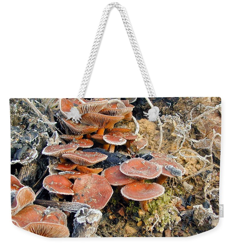 Frosted Weekender Tote Bag featuring the photograph Frosted Cascading Mushrooms by Douglas Barnett