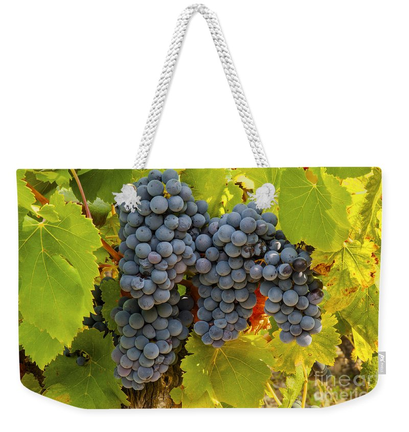 Saignon Weekender Tote Bag featuring the photograph Fruit Of The Vine Imagine The Wine by Bob Phillips