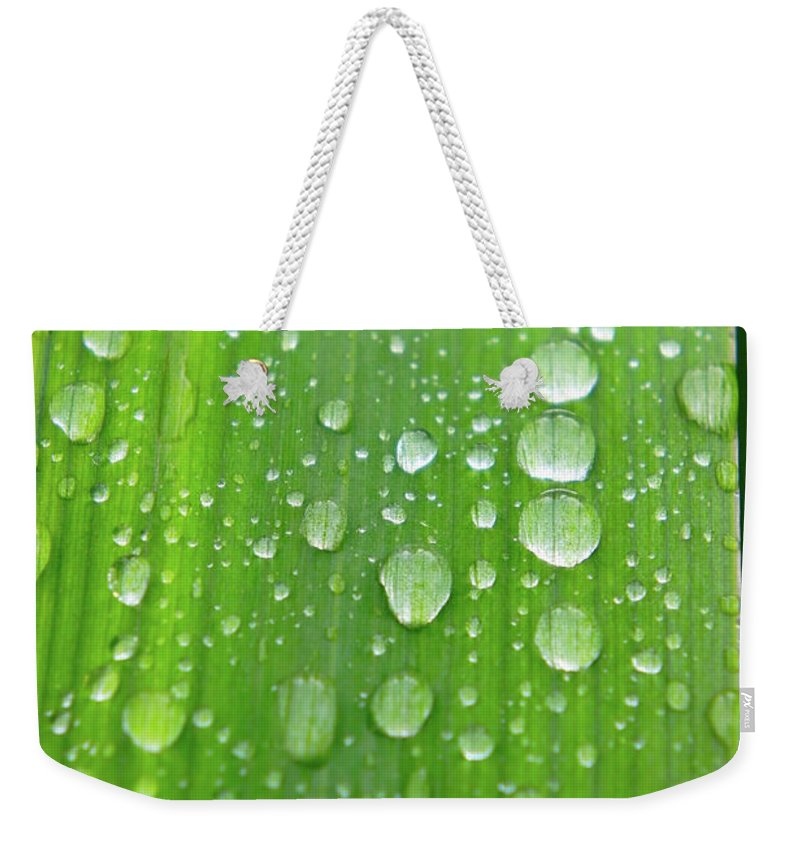 Grass Weekender Tote Bag featuring the photograph Full Frame Shot Of Wet Leaf by Elena Lyashenko / Eyeem