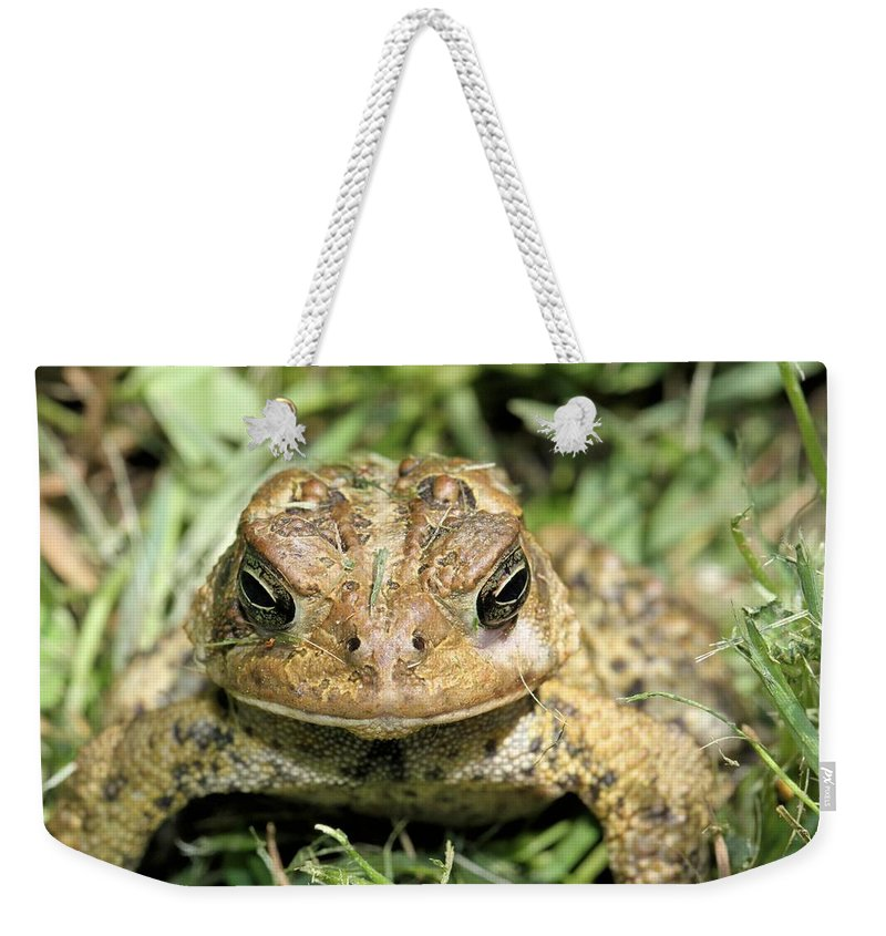 American Toad Weekender Tote Bag featuring the photograph Full Frontal by Doris Potter