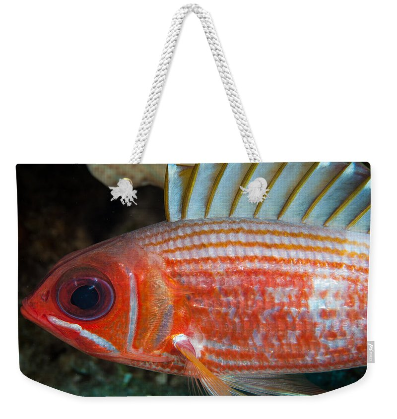 Squirrelfish Weekender Tote Bag featuring the photograph Full Sail Ahead by Jean Noren