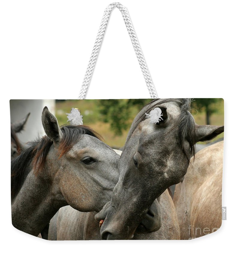 Horse Weekender Tote Bag featuring the photograph Funny Horses by Angel Ciesniarska