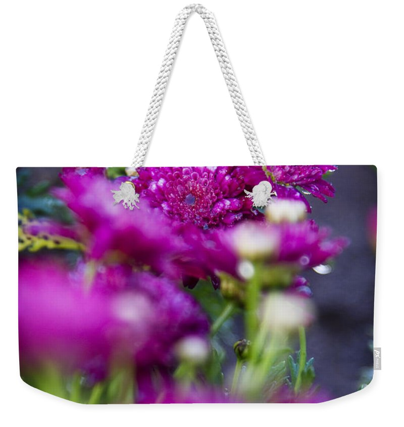 Fuschia Mums Weekender Tote Bag featuring the photograph Fuschia Mums 1 by Jessica Velasco